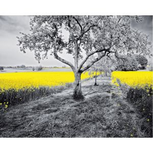 Black & White Trees Yellow Field Custom Made Picture Frame