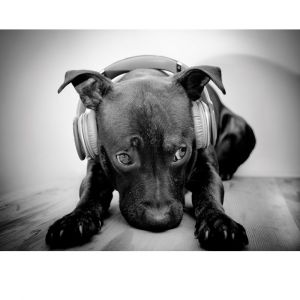 Dog With Headphones Custom Made Picture Frame